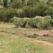 2009-05-Esel